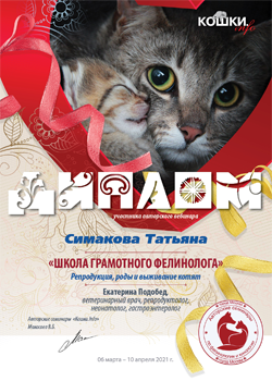 Изображение - Сертификат от Кошки info